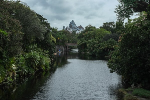 Animal Kingdom 2012