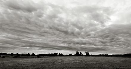 Newmarket Sky