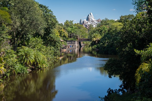 Animal Kingdom 2013